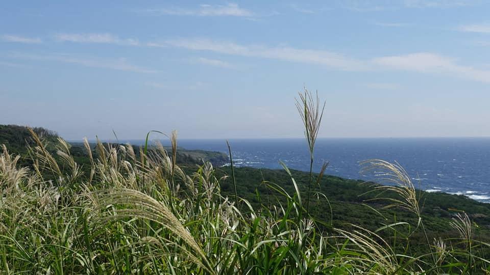 伊豆大島 すすき