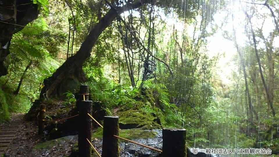 【八丈島】裏見ヶ滝