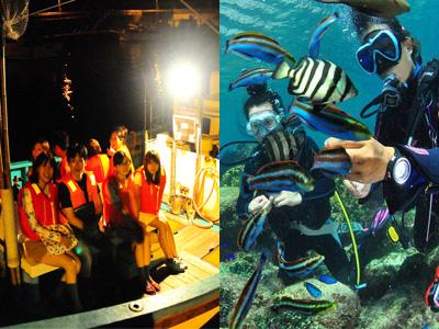 【7-8月限定】体験ダイビング+夜光虫ナイトクルーズ