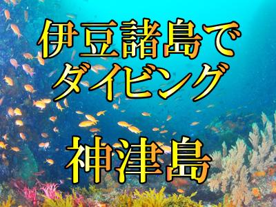 神津島でダイビング!伊豆諸島ツアー