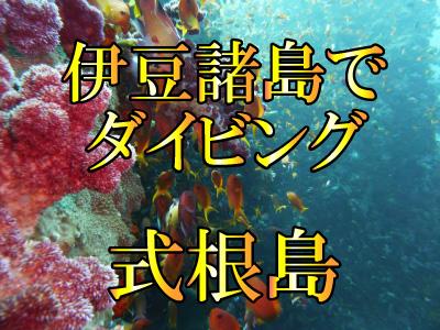 式根島でダイビング!伊豆諸島ツアー