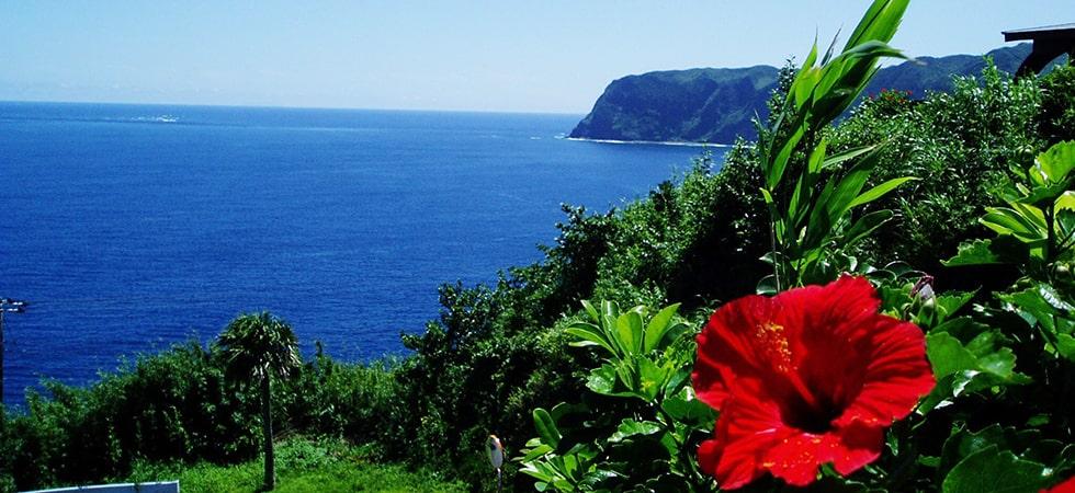 八丈島は常春の島。温暖・多湿な気候で色とりどりのハイビスカスが映えます。