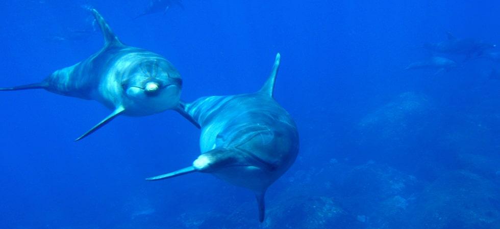 三宅島より南に18km。御蔵島周辺では野生のイルカと泳ぐことのできる世界でも貴重なスポットです。