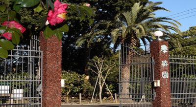 【伊豆大島】都立大島公園(椿園・椿資料館・動物園)