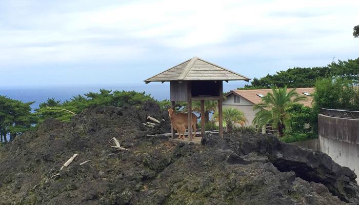 【伊豆大島】都立大島公園(椿園・椿資料館・動物園) 大島動物園