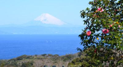 【伊豆大島】椿花ガーデン
