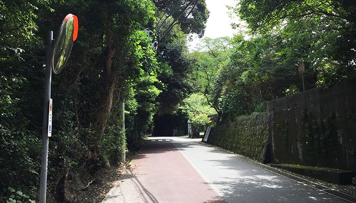 【伊豆大島】椿トンネル