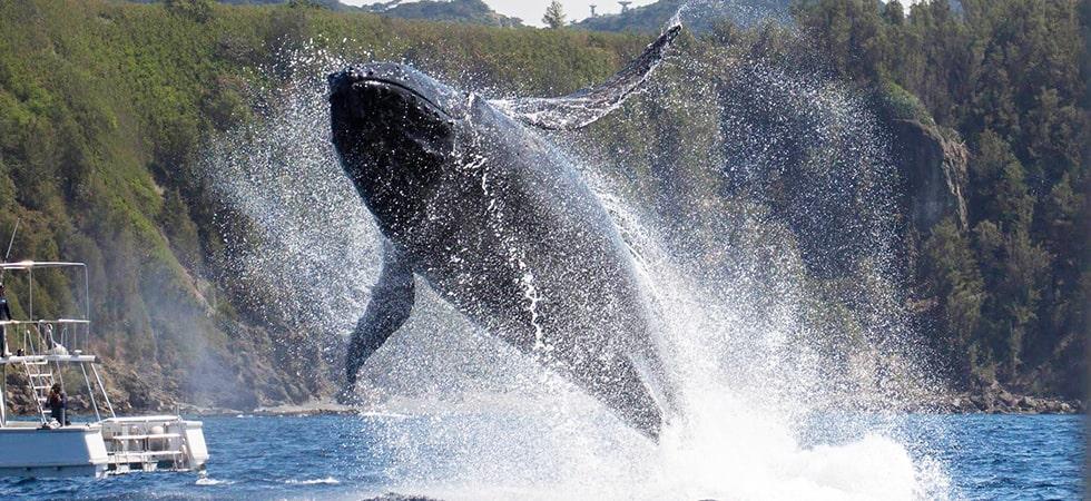 ほぼ1年を通じていつでもクジラを観ることができます。自然界の大迫力を是非体験してみてください。
