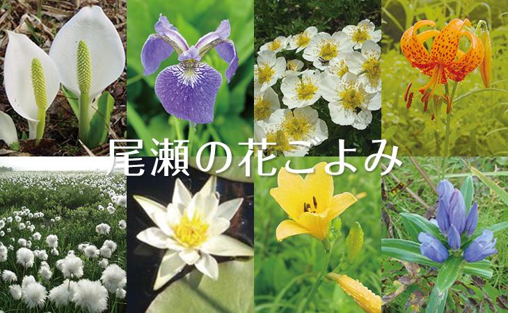 尾瀬の花ごよみ