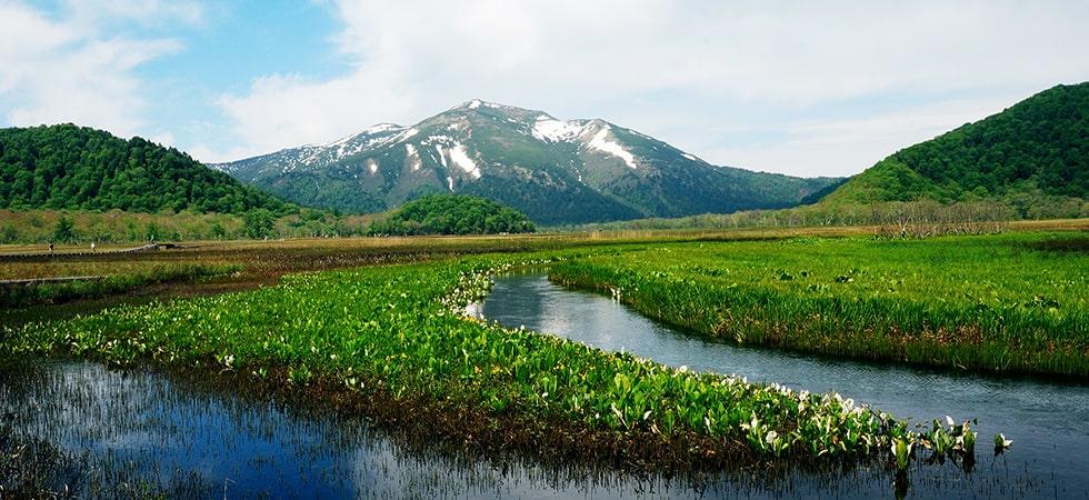 長い長い時間をかけて隆起をしてきた山で、他の山では見られない様々な花が咲きます。