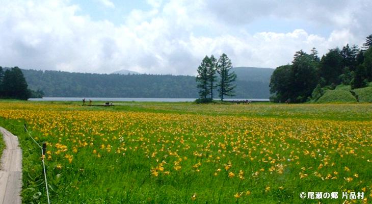 大江湿原(7月頃、ニッコウキスゲの時期)
