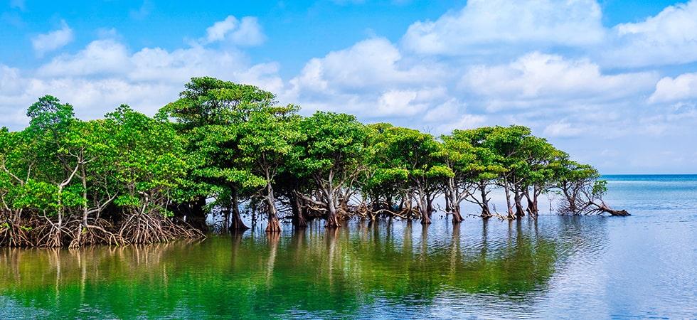 ジャングルが広がる西表島は島の約90%が亜熱帯の森に囲まれている。遊覧船で気軽に見学可能。