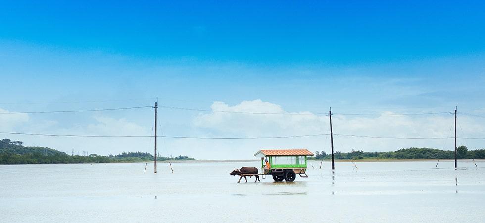 由布島での牛車体験は必須もの。西表島より牛車に乗って渡ります。人気のフォトスポットです。